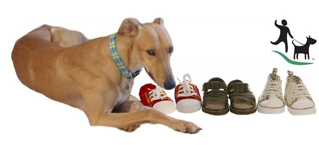 shoe-flyer_edited-2-logo
