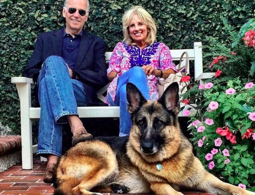 Newsmax Makes Stupid Attack On Biden's Dog Champ à la FDR's Dog Fala